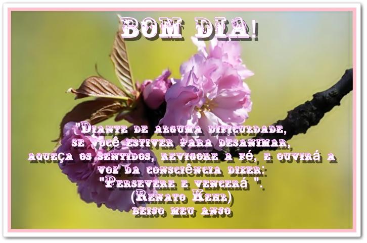 Mensagens De Bom Dia Flores: Cantinho Da Rosy
